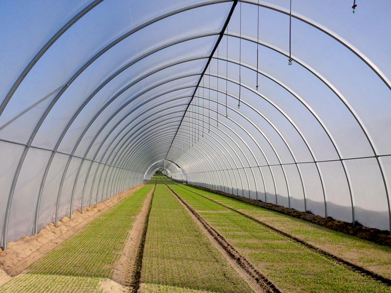 Serre tunnel agricole oriente ts for Serre tunnel usate
