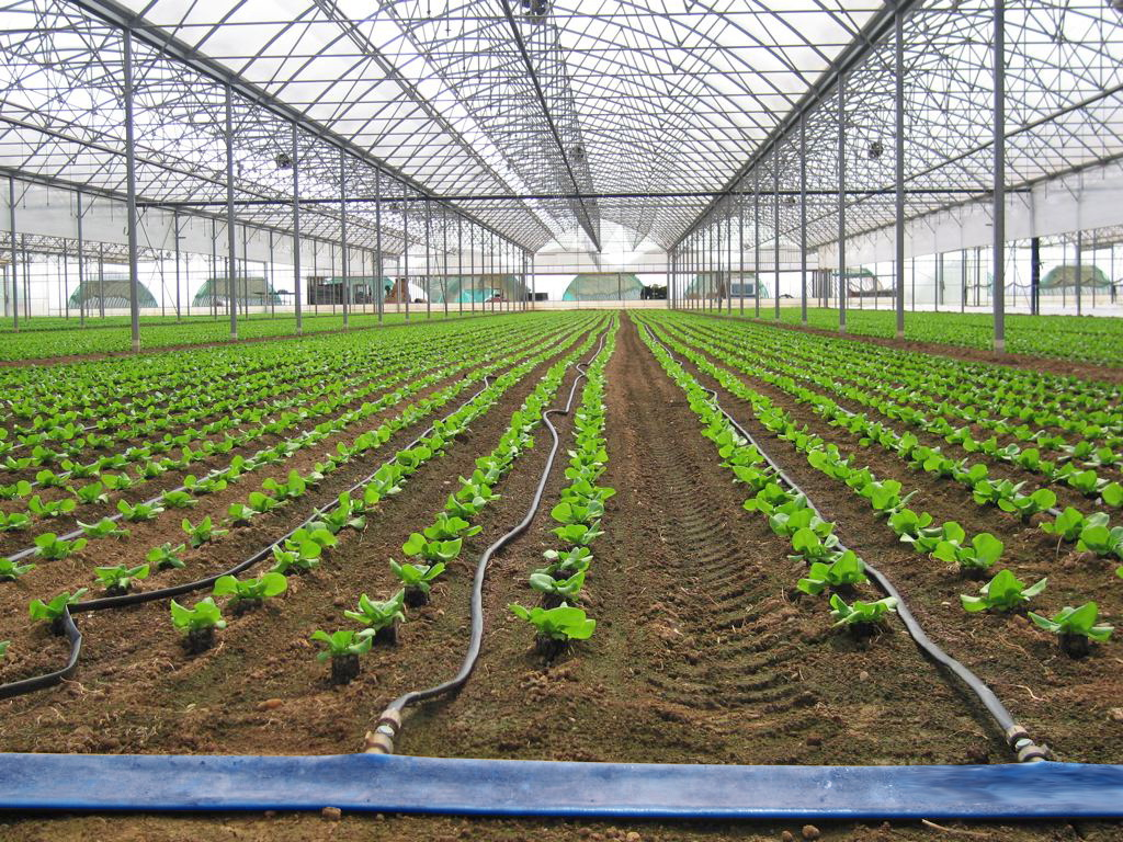 Drop by Drop Irrigation System | Greenhouse Irrigation Systems