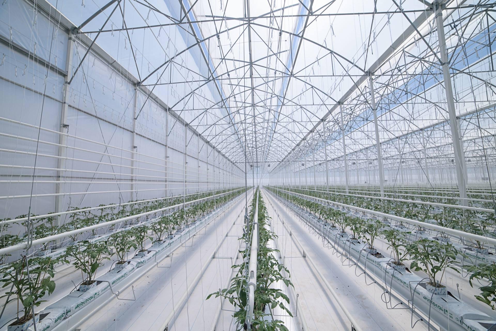 Led per l orticultura un trend in forte crescita luce e design