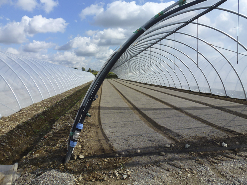 Tunnel Greenhouses | Agricole | Oriente TS